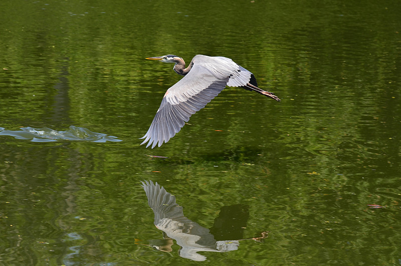 apr 25 4485 flying reflection