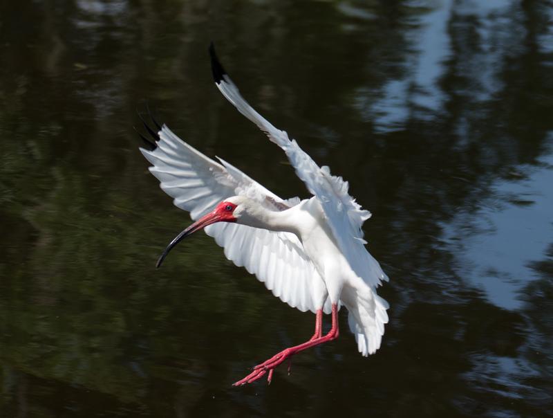 apr 27 7907 ibis