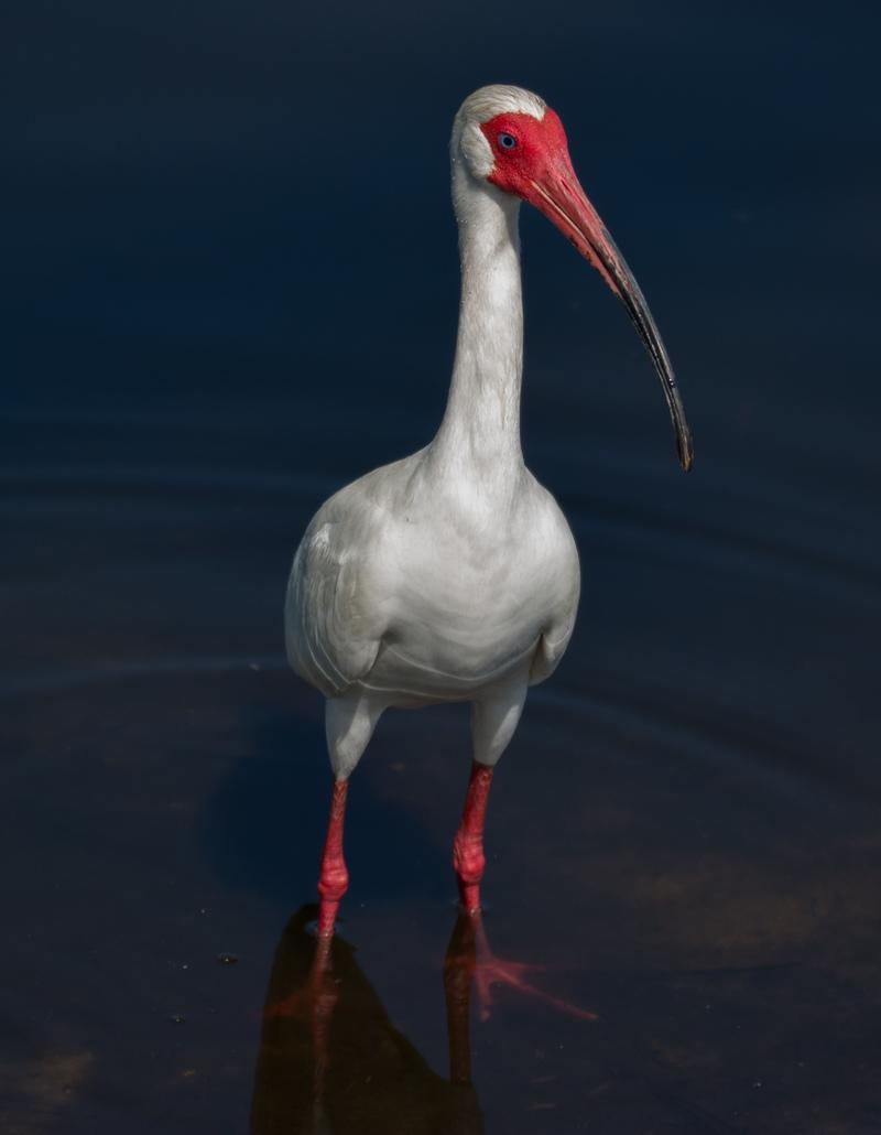 apr 27 7926 ibis