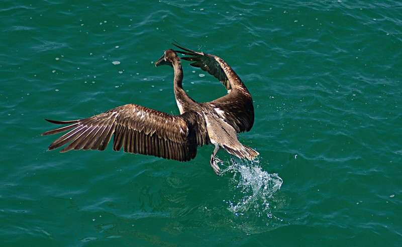 apr 28 1021 pelican takeoff