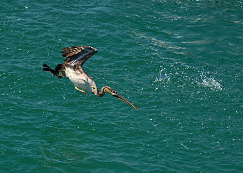 apr 28 1067 diving