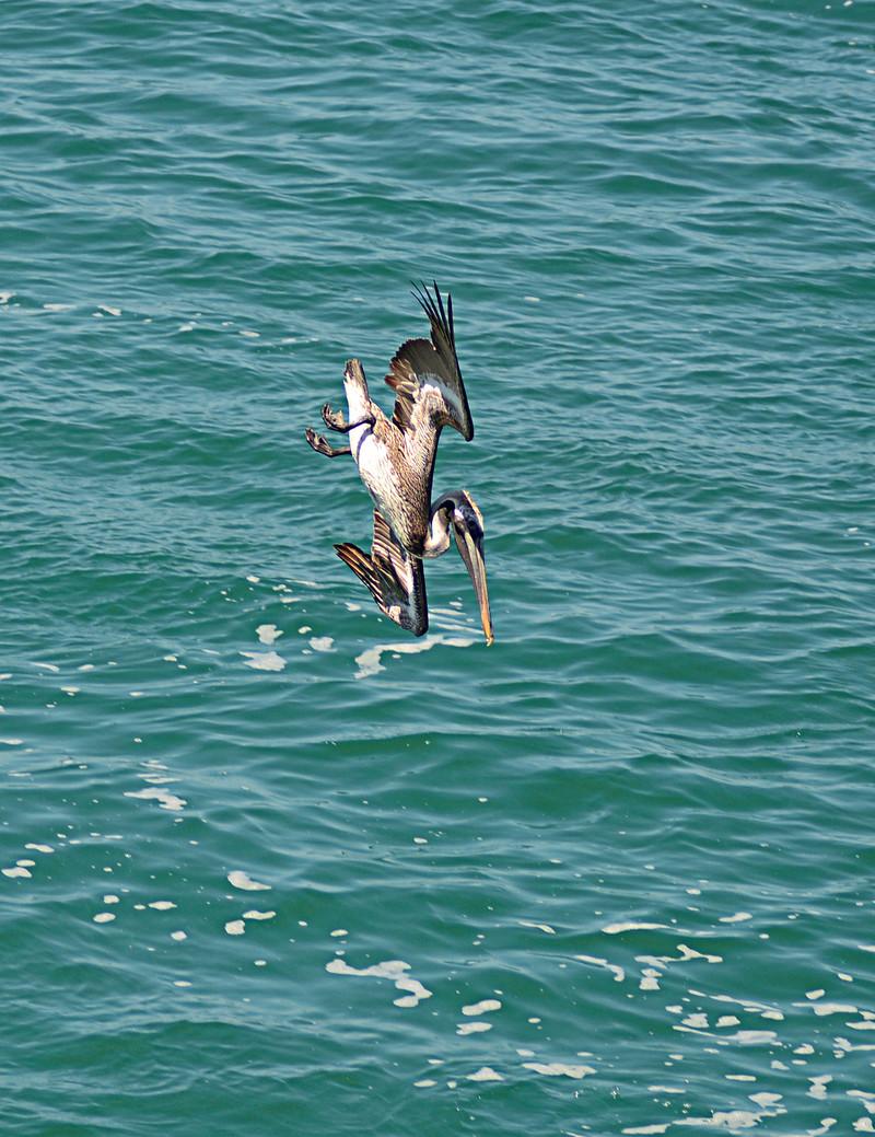 apr 28 1670 pelican dive