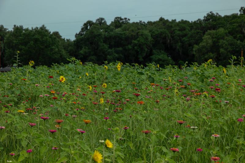 apr 30 6680 wild flowers