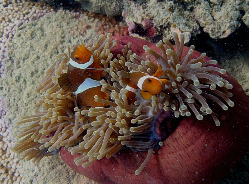 aug 02 1598 clowns white sand