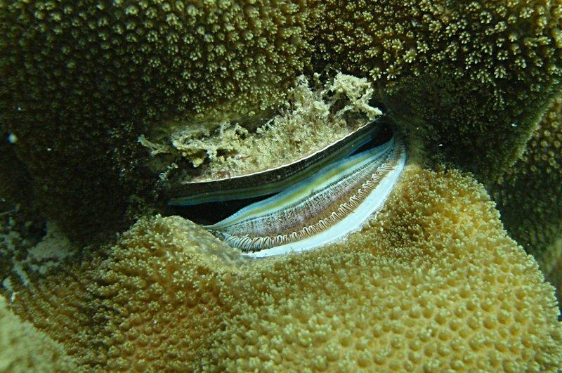 aug 02 1623 clam like