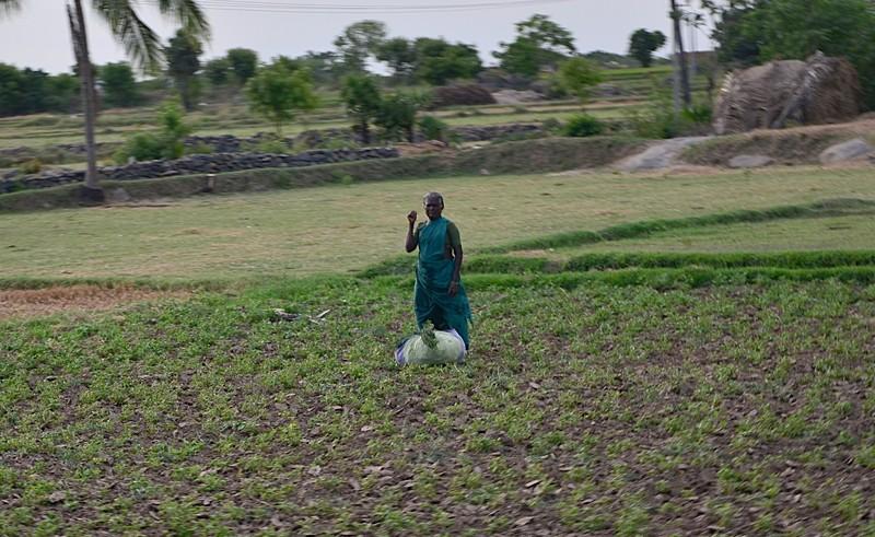 aug 05 5246 rice lady