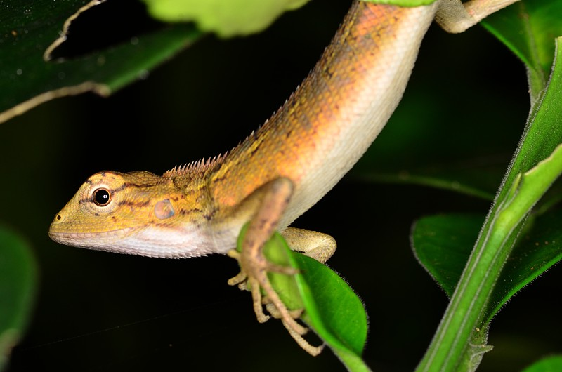 aug 11 8882 green lizard