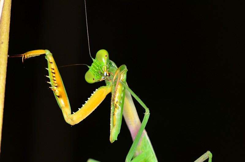 aug 11 8905 mantis cleaning
