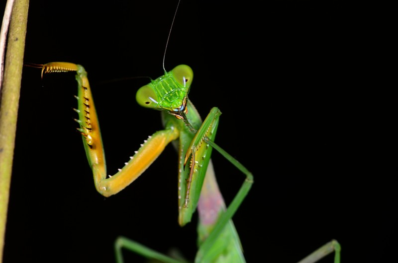 aug 11 8908 mantis cleaning