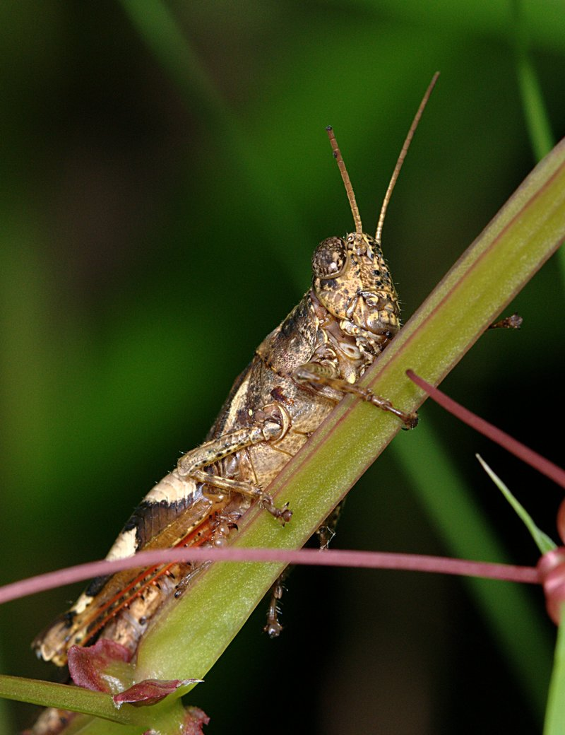 """grasshopper essay The ant's dilemma in the aesop's fable, """"the ant and the grasshopper"""" topic  we will write a custom essay sample specifically for you."""