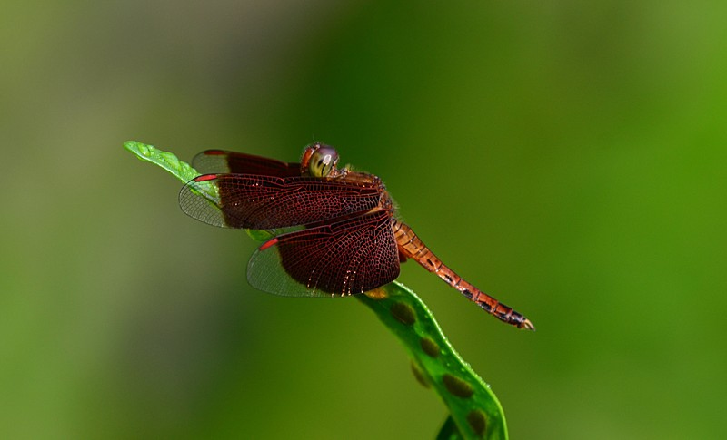aug 21 6689 dragonfly side