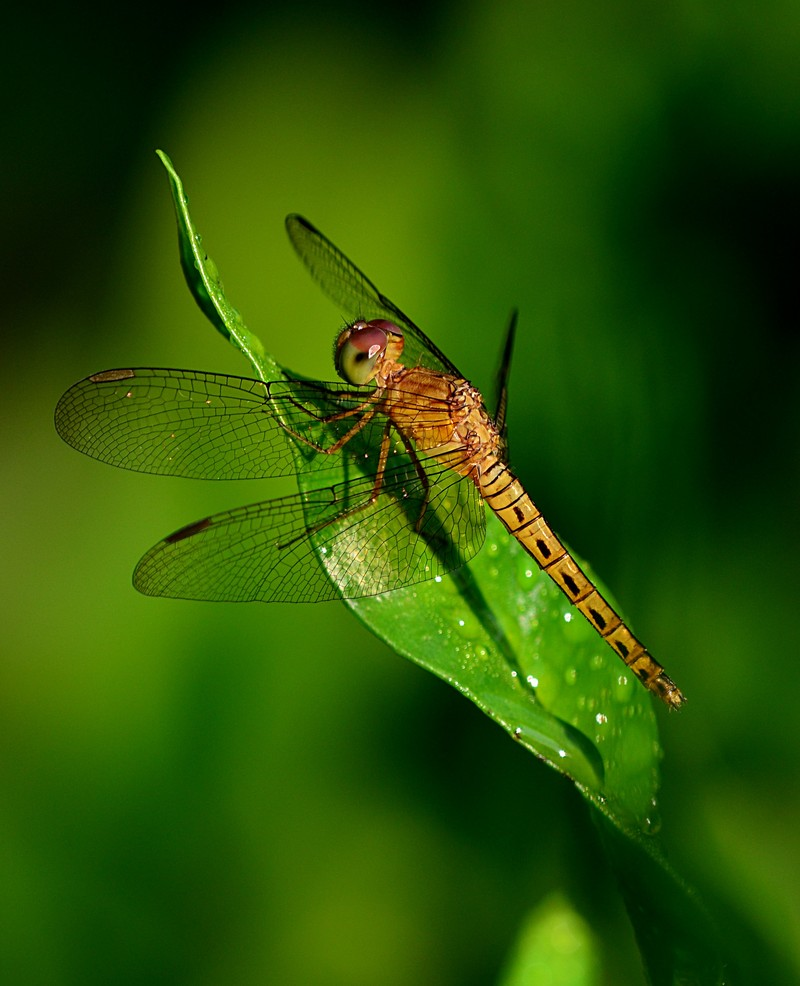 aug 21 6700 yellow dragonfly
