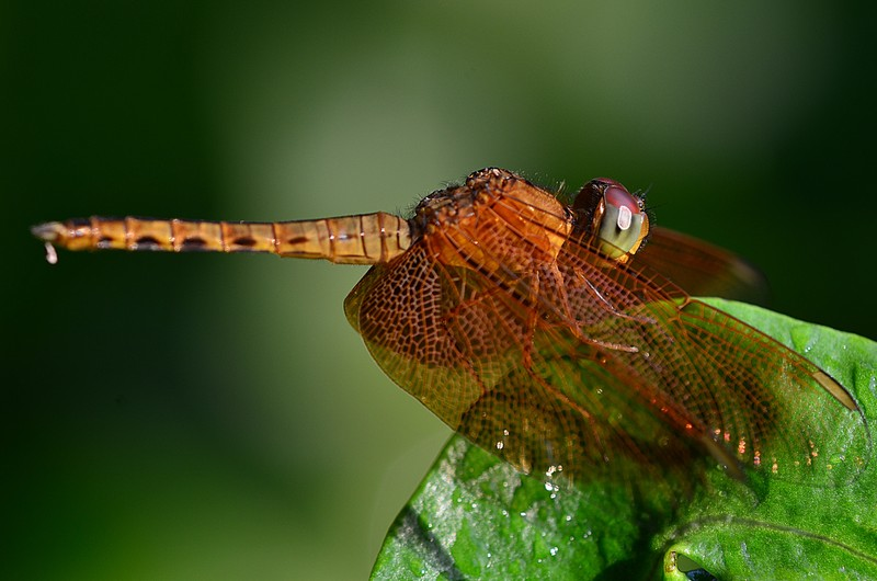aug 21 6749 dragonfly eyes