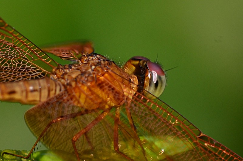 aug 21 6754 dragon fly eye close