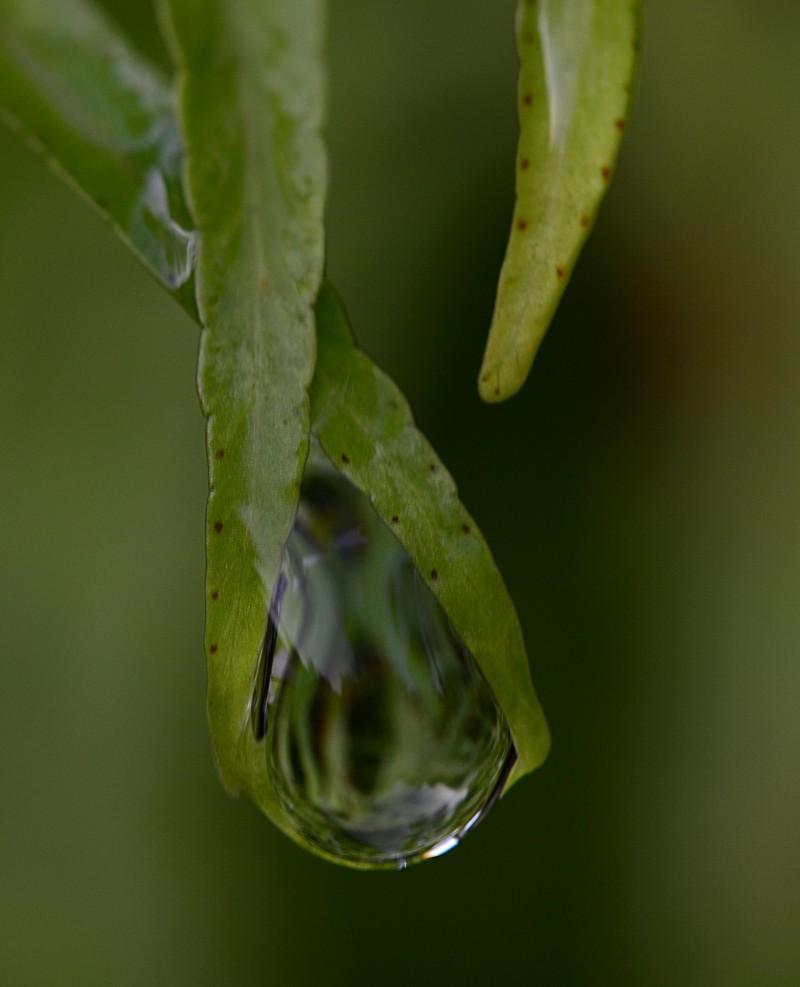 aug 21 6778 dropplet lens