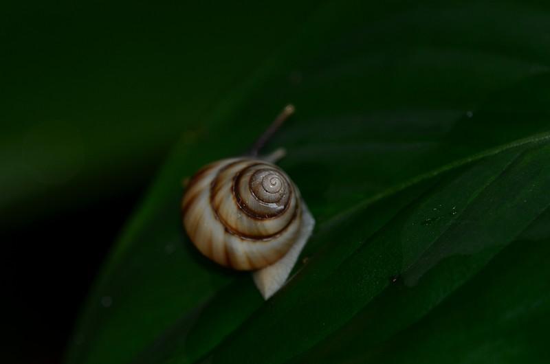 aug 21 6811 spiral snail