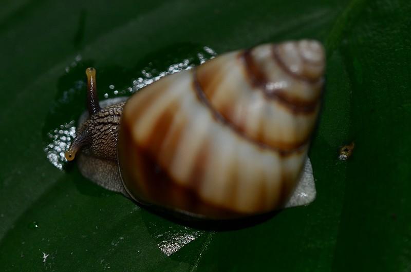 aug 21 6813 snail eyes