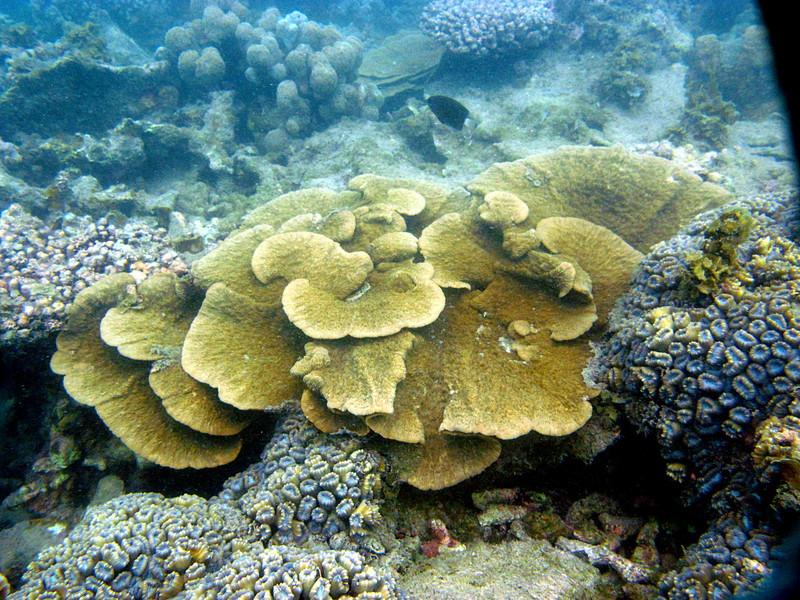 aug 24 5411 tan coral
