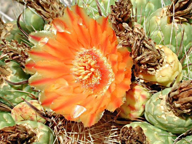 Desert flower essay