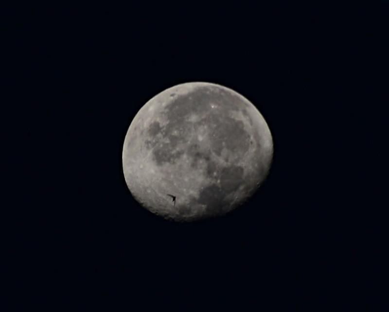 dec 02 2552 bird moon