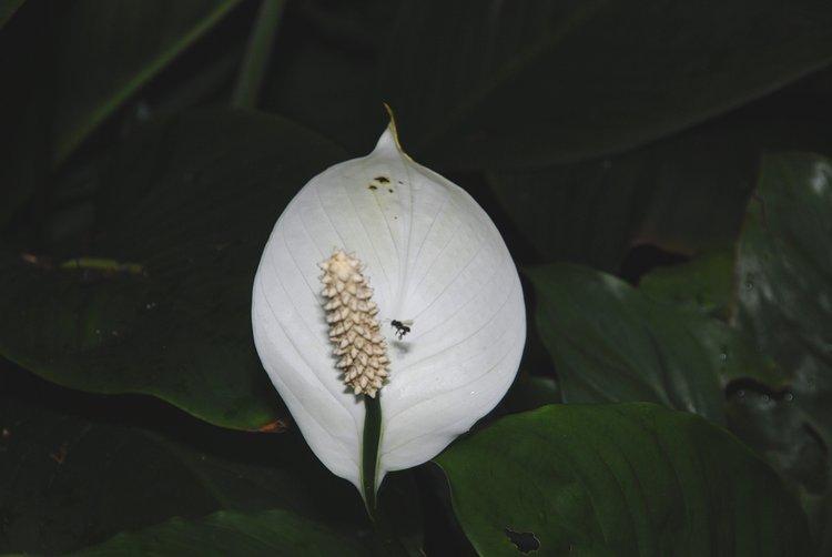 https://s3.amazonaws.com/s3.frank.itlab.us/photo-essays/small/dec 03 0700 flower bug