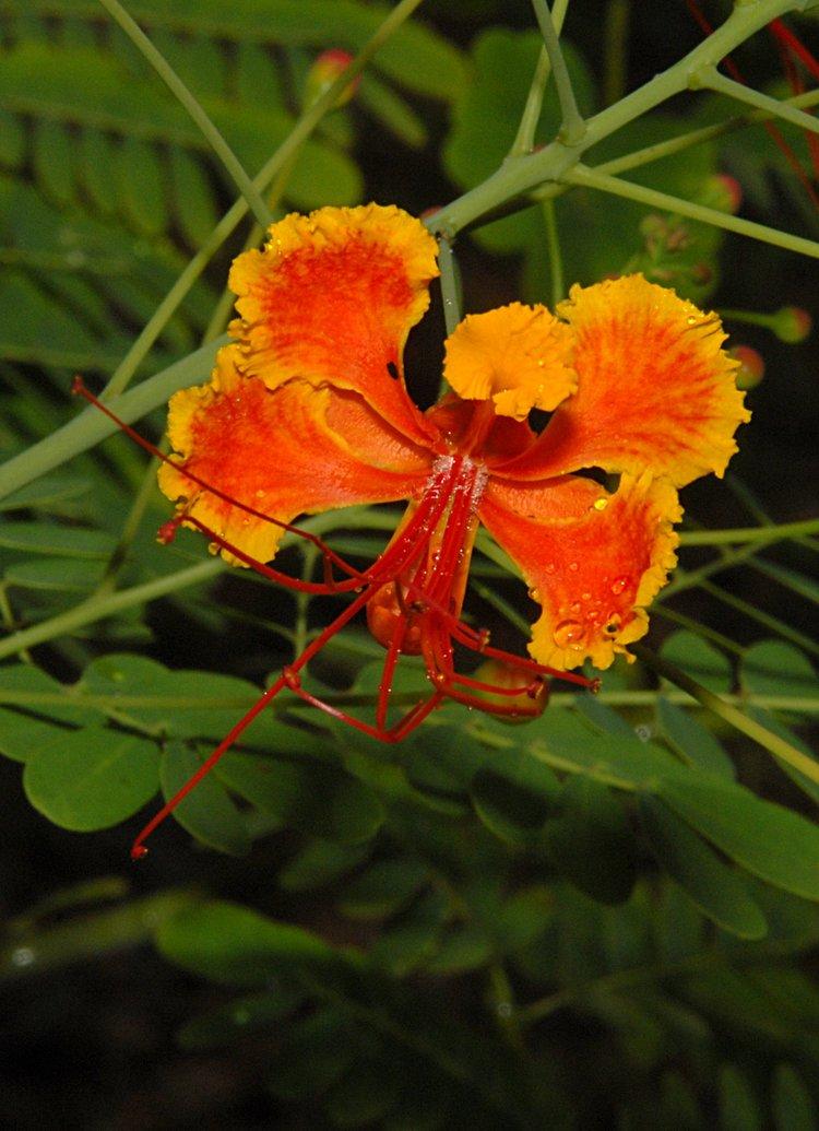 https://s3.amazonaws.com/s3.frank.itlab.us/photo-essays/small/dec 03 0716 orange flower