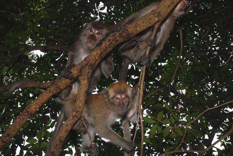 https://s3.amazonaws.com/s3.frank.itlab.us/photo-essays/small/dec 03 0770 3 monkies