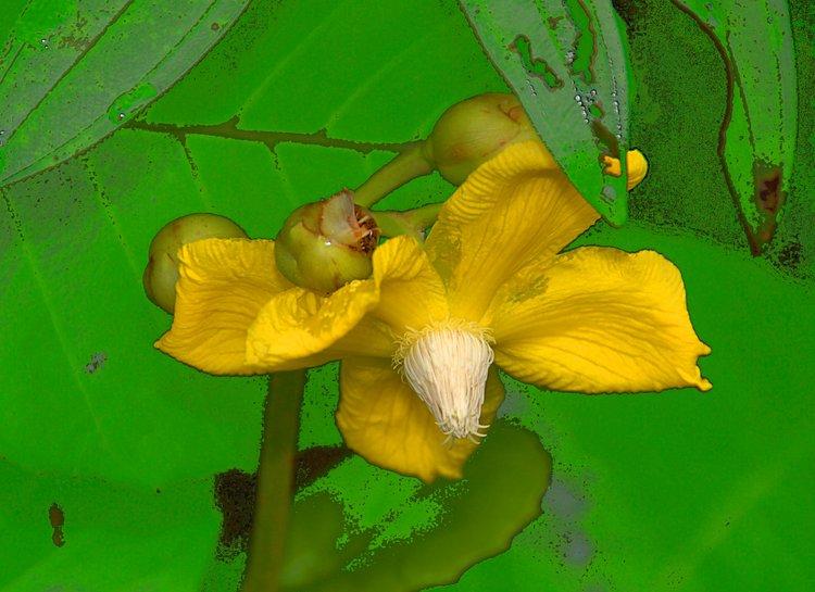 https://s3.amazonaws.com/s3.frank.itlab.us/photo-essays/small/dec 03 0813 yellow flower
