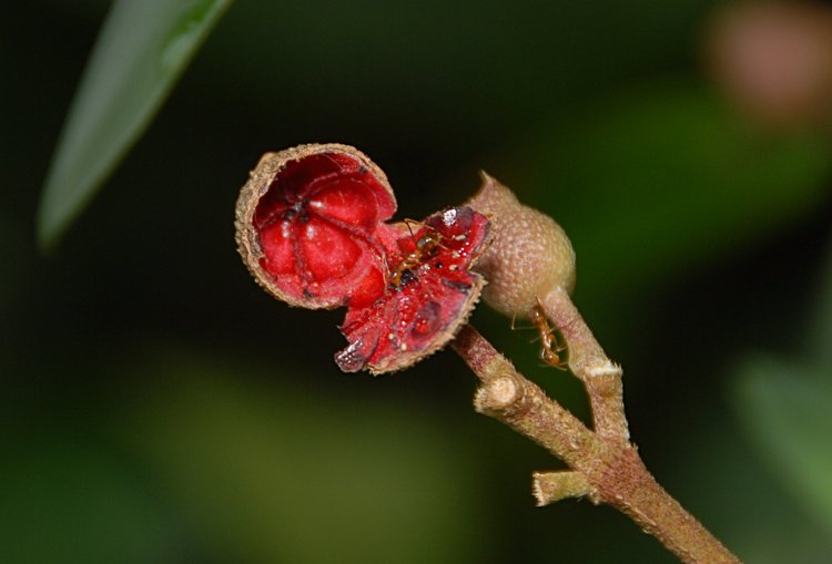 https://s3.amazonaws.com/s3.frank.itlab.us/photo-essays/small/dec 03 0855 seed pod