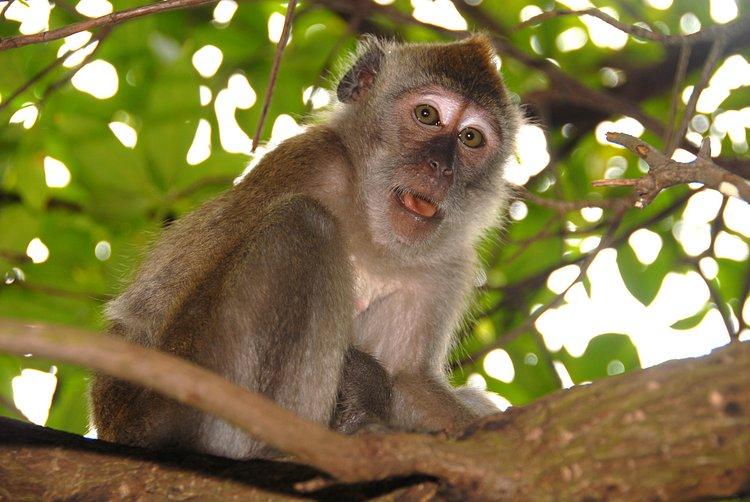 fleeting power monkey bridge essay