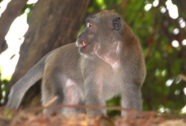 https://s3.amazonaws.com/s3.frank.itlab.us/photo-essays/small/dec 03 0907 monkey teeth