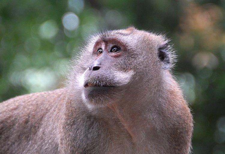 https://s3.amazonaws.com/s3.frank.itlab.us/photo-essays/small/dec 03 0944 monkey look