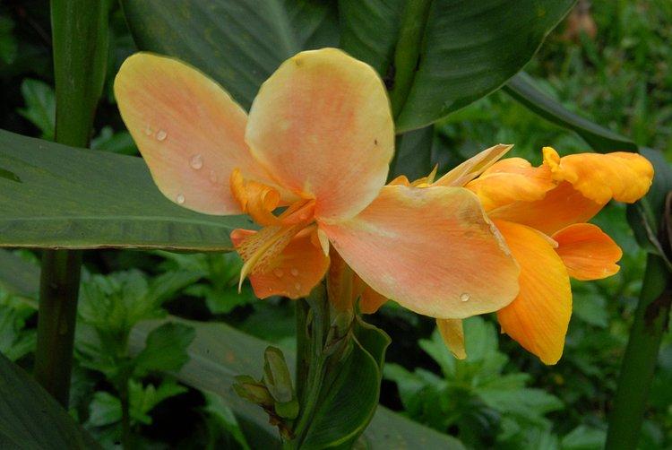 https://s3.amazonaws.com/s3.frank.itlab.us/photo-essays/small/dec 03 0963 orange flower