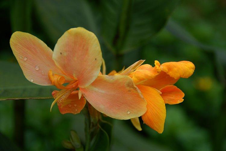 https://s3.amazonaws.com/s3.frank.itlab.us/photo-essays/small/dec 03 0967 orange flower