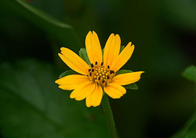 https://s3.amazonaws.com/s3.frank.itlab.us/photo-essays/small/dec 03 0969 yellow flower