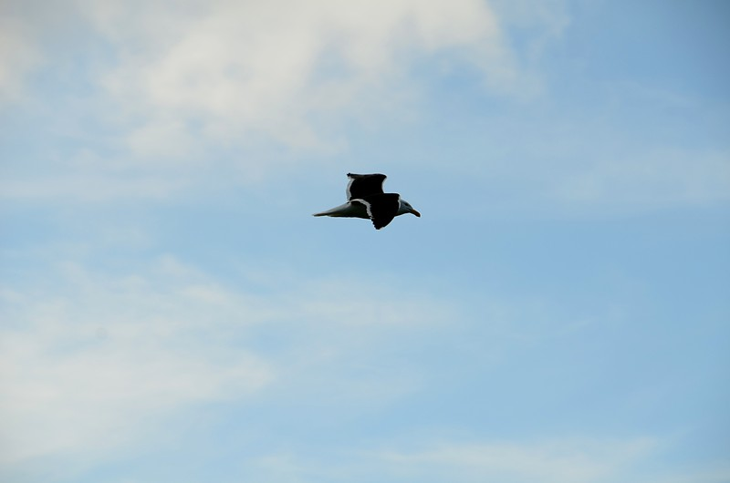 dec 03 5564 seagull