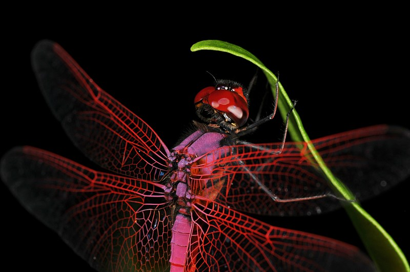 essays on gender and language A Essay On Dragonfly