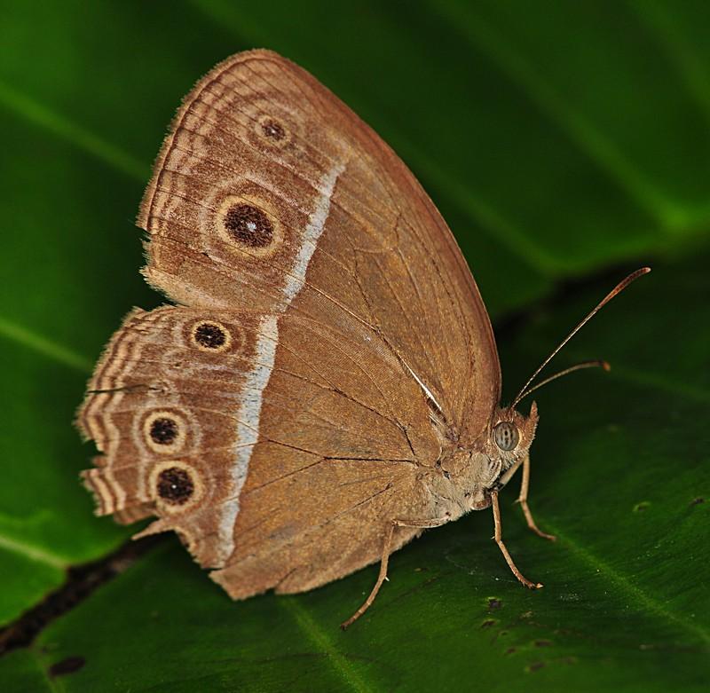 dec 05 8111 butterfly eye