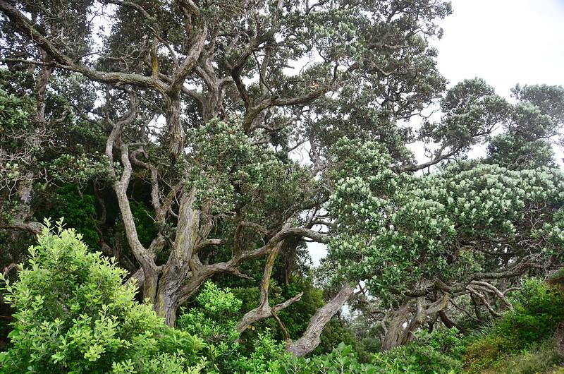 dec 06 7231 tree
