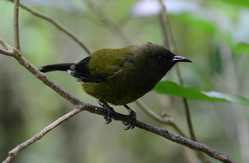 dec 06 7807 bell bird