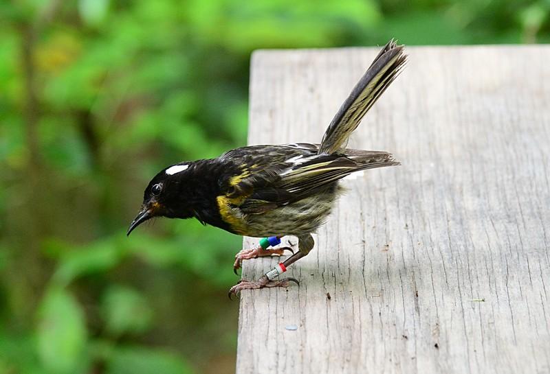 dec 06 7852 stitch bird