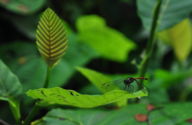dec 07 6529 dragonfly