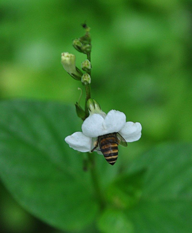 dec 07 6534 bee hunting