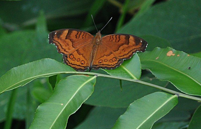 dec 07 6549 butterfly
