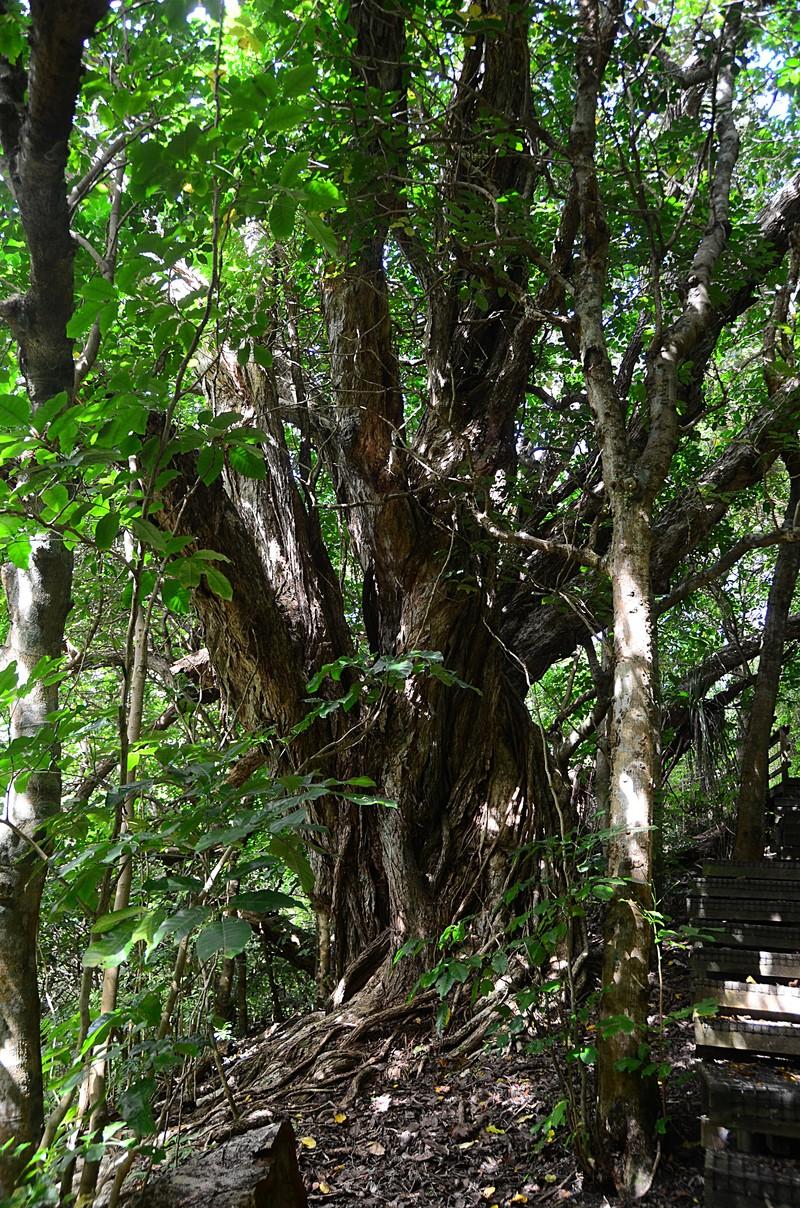 dec 07 8108 tree