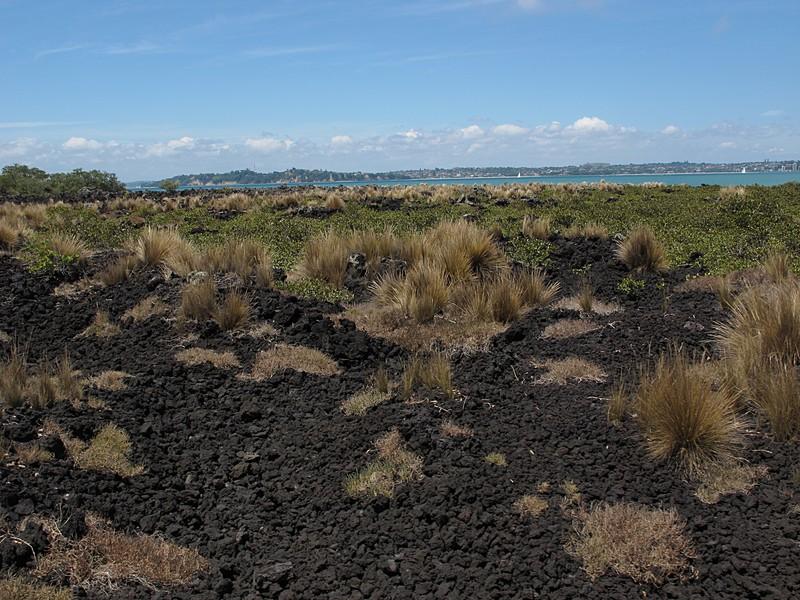 dec 09 0318 lava field plants