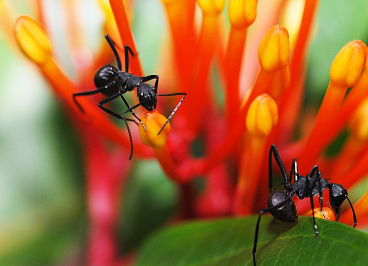 dec 09 1172 ants