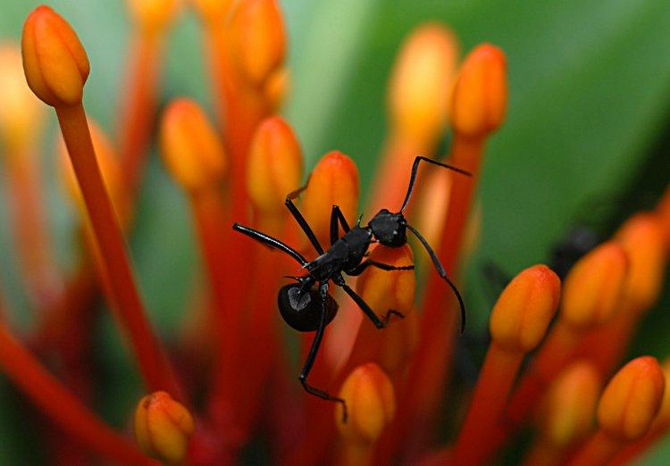 dec 09 1174 ant eyes
