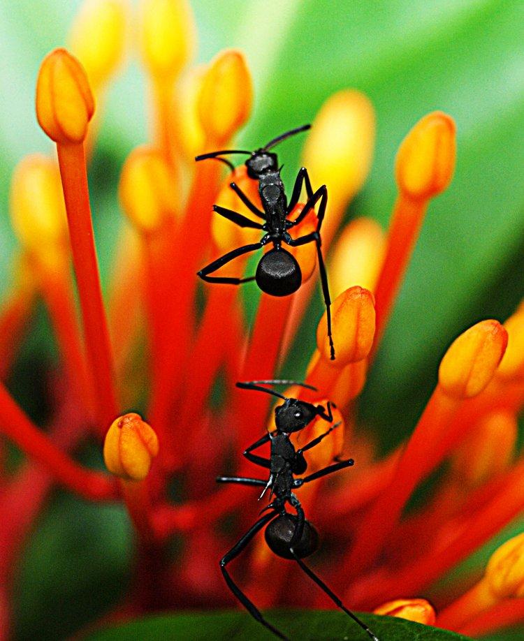 dec 09 1242 2 ants