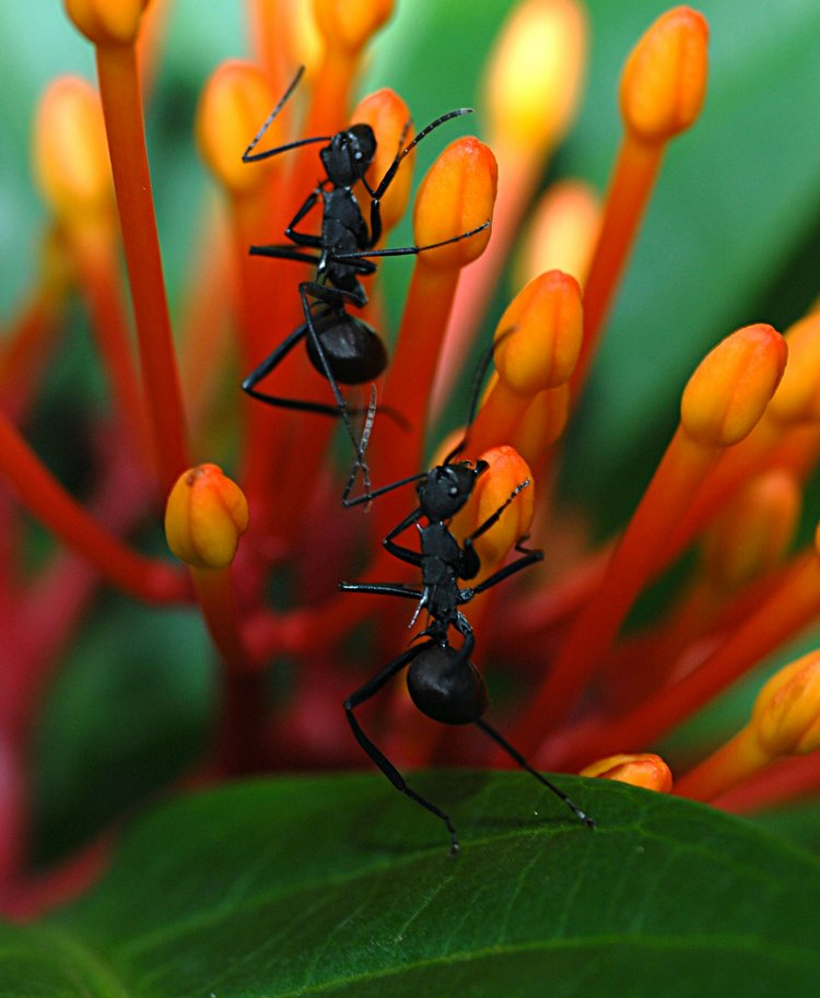 dec 09 1247 2 ants
